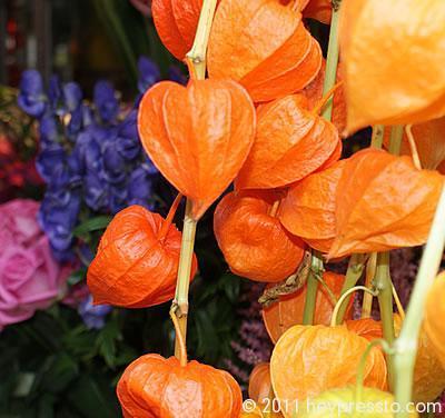 orange_lanterns_2_igloo_400_188b6f