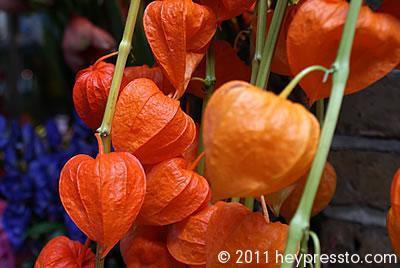 orange_lanterns_igloo_400_127e4e