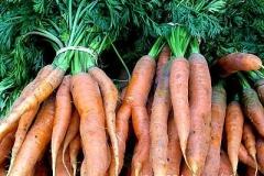 carrots_1b5099