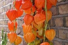 orange_lanterns_3_igloo_400_1a7f94