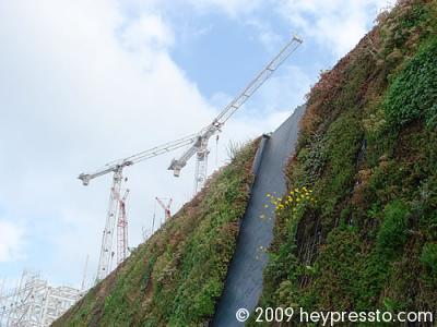 Cranes on the Skyline 1