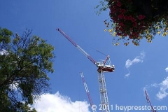 Crane and Flowers at Finchley