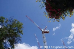 Crane and Flowers