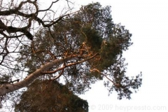 tree_in-_golden_light_123f67