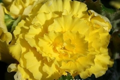 yellow_flower_18e36a
